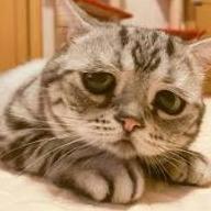 Кот из фамы депардесс